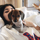 Kylie Jenner Posts an Update On Her New Beagle Penny Jenner