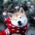 Top 5 Reasons Pets Make Winter Better