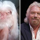 Celebrity Stunt Double Look-a-Likes If They Were Pets