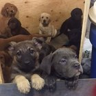 104 Puppies Found in a New York Truck Crash Lead Adoptions