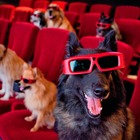 5 Movies with The Cutest Pets You Forgot About