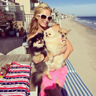 Check Out Paris Hilton's $325k Dog Villa in Beverly Hills