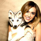 Miley Cyrus Shoutout for Her Passed Dog Floyd for His 5th Birthday