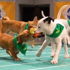 Puppy Bowl XIII – 5 Furry Facts