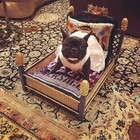 Frenchie: Miss Asia Kinney Models $2,400 Versace Cushions While Lady Gaga Preps for Super Bowl 51