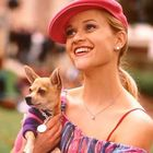 Bruiser Woods the Chihuahua from 'Legally Blonde' Passed Away in a Post by Reese Witherspoon