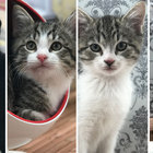 Keeping Up With The Kattarshians: The kitten version of the Kardashians we always wanted
