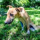 Paralyzed Puppy Drags Herself Through African Wilderness to Safety