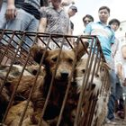 Taiwan Becomes First Asian Country to Officially Ban Eating Dog and Cat Meat