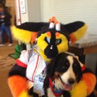 Woman brings her dog to a Furry Convention, hilariously finds out it's not for pets