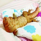 Check Out This Big Red Lizard (@macgyverlizard) That Acts Like a Puppy!