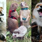 Top 10 Odd Instagram Pets