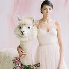 Skip human bridesmaids and groomsmen, pick wedding llamas instead!