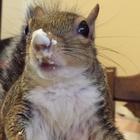 Jill the Squirrel, Hurricane Isaac survivor, Now Lives the High Life as a Parkour Expert