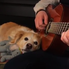 Let this acoustic guitar-loving dog teach you how to chill