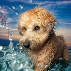 See the winners of the 2017 Dog Photographer of the Year Awards