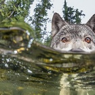 """Check out these badass """"sea wolves"""" that hunt underwater"""