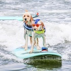 The World Dog Surfing Championship is also the cutest extreme sports championship