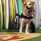 Super Scooty miracle pup overcame all odds, proving everyone wrong