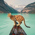 The Instagram adventures of Suki the bengal cat