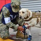 Earthquake devastates Mexico, four legged doggo heroes come to the rescue!