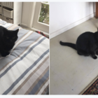 Mistaken cat-dentity: guy accidentally kidnaps neighbours cat, keeps hostage for 5 days
