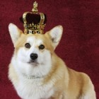 Corgi's replace actors on The Crown and it's 🔥