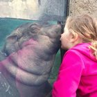 Princess Fiona the Hippo smooches adorable little girl