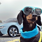 The Fast and the Furious: Wiener Dog Drift