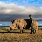 Last Rhino Dies: a Tragedy Caused by Poaching