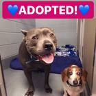 Best Friend Orphan Dogs Blue Dozer and OJ Adopted Together