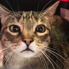 Expert Escape Artist Pepper the Cat Finally Apprehended in JFK Airport