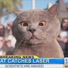 """The cat who finally caught the laser"" and more hilarious cat videos from Aaron's Animals"