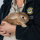 Bunny Mistaken for Bomb In Airport – Causes Havoc