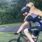 Cyclist Bikes Injured Dog 7 Miles, Saving His Life