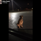 'Gold-Digging' Dog Pretends to be Homeless to Score Hamburgers