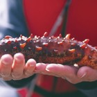 Million Dollar Fine Issued to Black Market Sea Cucumber Poachers