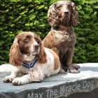 Max the Miracle Dog Gets a Statue