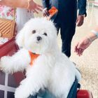 Dog Enjoys Entire Air India Business Class Cabin For Private Flight