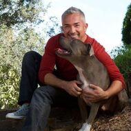 Cesar Millan Pets