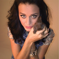 Katy Perry Pets