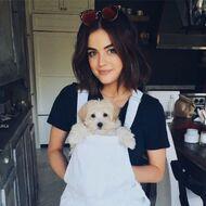 Lucy Hale Pets