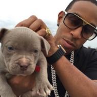 Ludacris Pets