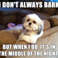 I don't always bark… but when I do, it's in the middle of the night.