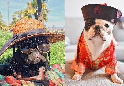 Top 10 Most Popular French Bulldogs on Instagram
