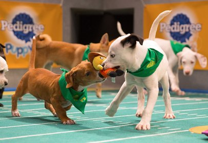 Puppy Bowl XIII - 5 Furry Facts