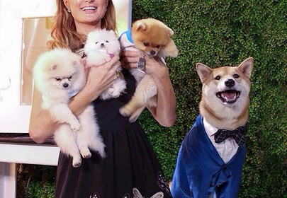 The Menswear Dog, Bodhi, Makes $15,000 a Month with Fashion Brand Coach