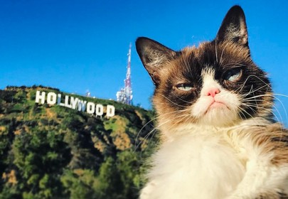 Top 10 Instafamous Felines Who Went From Rags to Richest