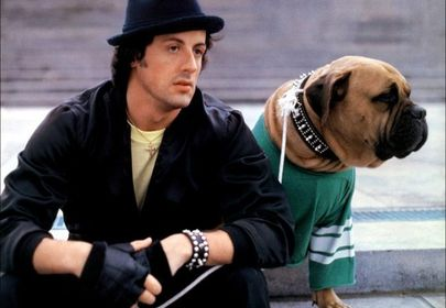 The Inspirational Story of a Broke Sylvester Stallone Selling his Dog for $40 and Buying Him Back for $15,000