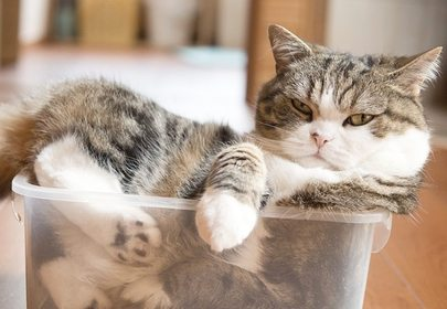 """If It Fits, I Sits"", Maru, the Cardboard Box King's Mantra Could Teach us All Something"